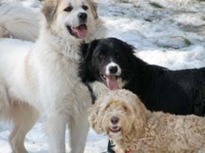 3 dogs looking at the camera with open mouth grins