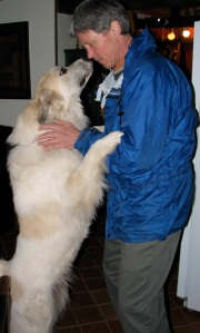 white dog standing on hind legs looking up at a man