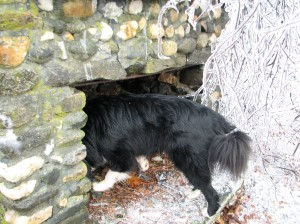 black dog sniffing in outdoor stone fireplace