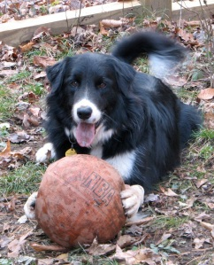 black & white dog with basketball