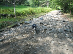 dirt road stripped of gravel by hurrican irene flood waters