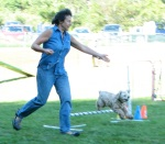 woman & cocker spaniel on agility course