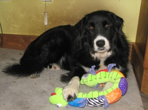 black & white dog with stuffed inchworm toy