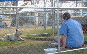 woman sitting with dog outside in a kennel