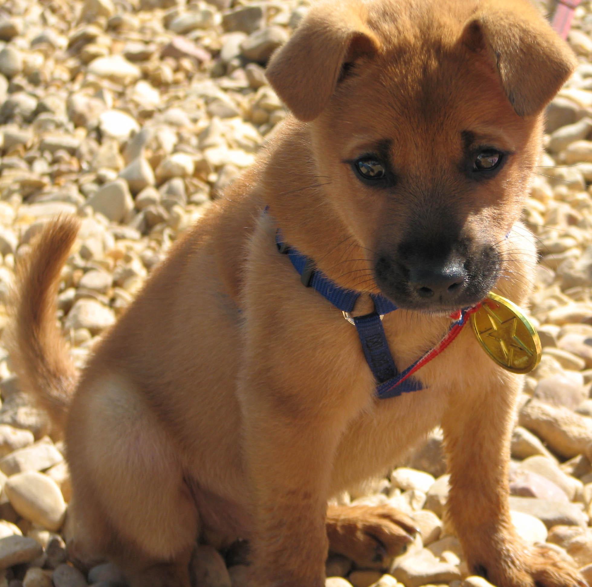 Pup pup pup pup