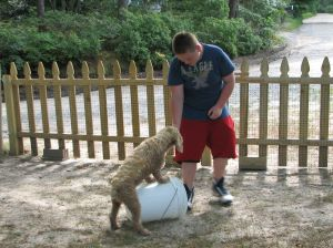 boy rewarding a cocker spaniel standing on a bucket