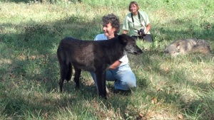 black wolf standing in front of a kneeling woman