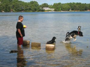 boy playing with dogs in a pond