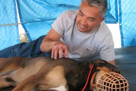 cesar millan taking away choice and control from a dog