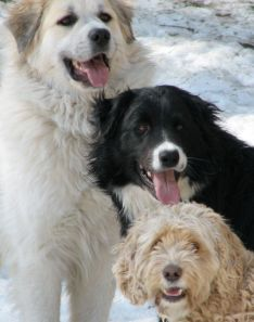 3 happy dogs facing the camera