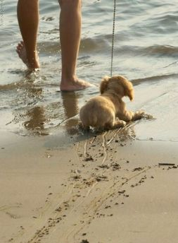 puppy being dragged into the ocean