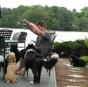 boy in chair surrounded by dogs he is training