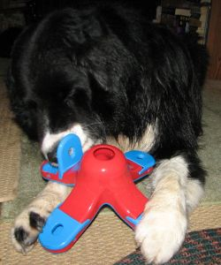 black dog playing with a plastic food toy