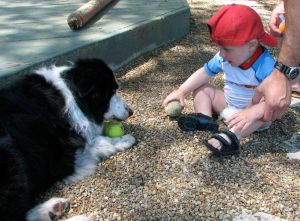 border collie with ball and baby sitting in front