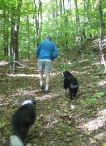 man walking in the woods with 2 dogs