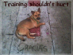 dog on pavement with caption training shouldn't hurt